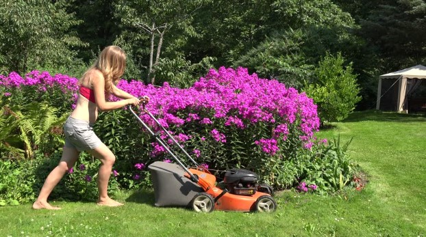 What Is The Best Way To Mow Around Shrubs?