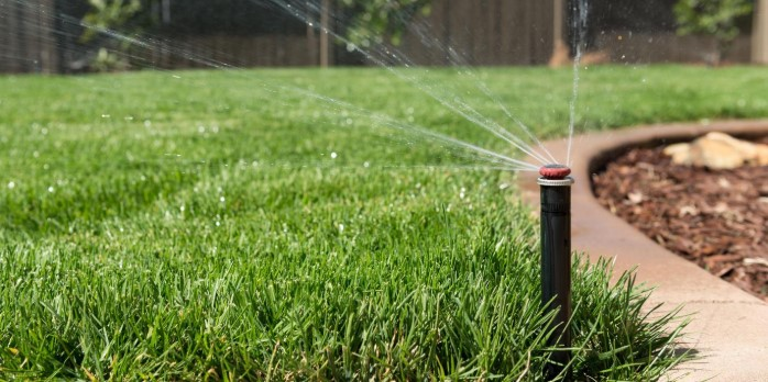 What Is The Best Type of Lawn in Hot Weather?