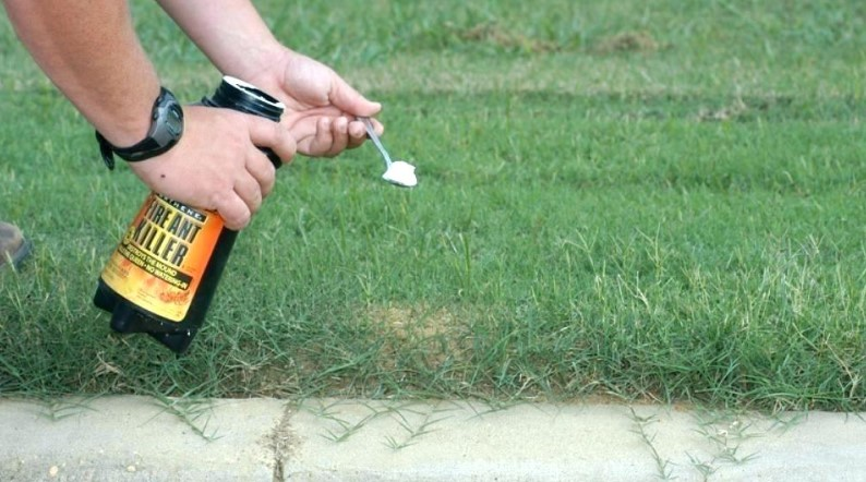 What is the Best Ant Killer for Lawns?