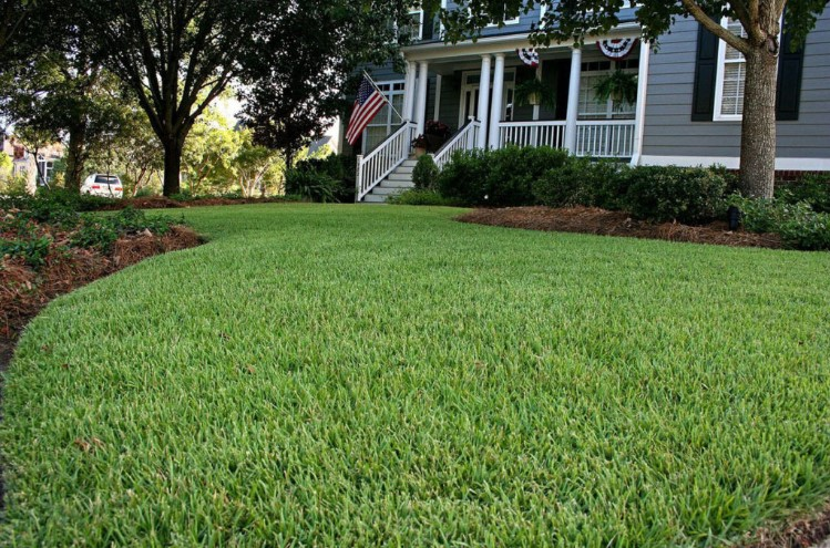 Choosing the Best Fertilizer for Zoysia Grass